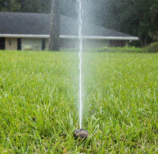 Friends, neighbors help influence our irrigation decisions, UF research shows